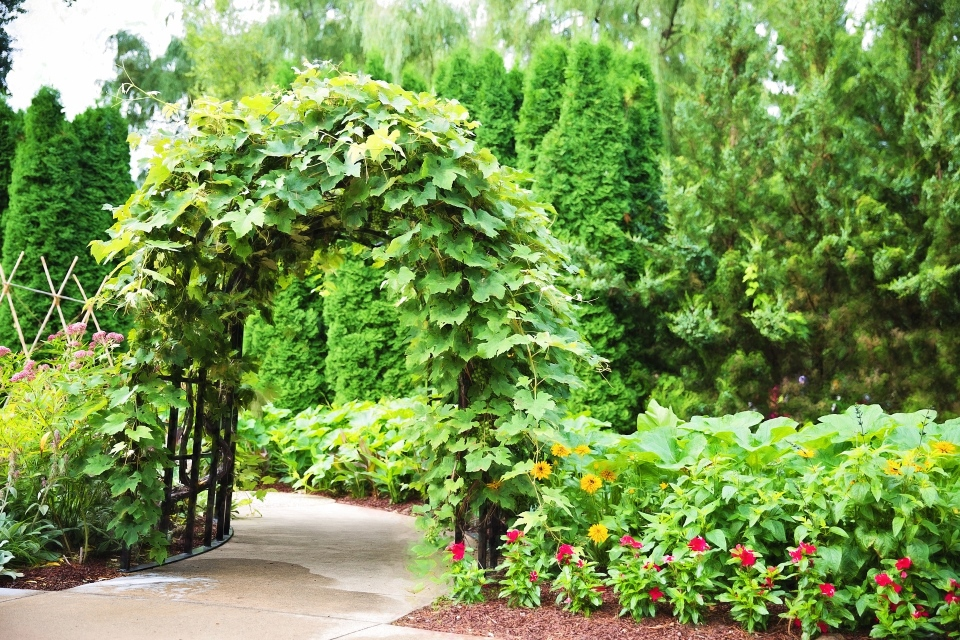 How To Landscape A Steep Slope On A Budget - Trellis